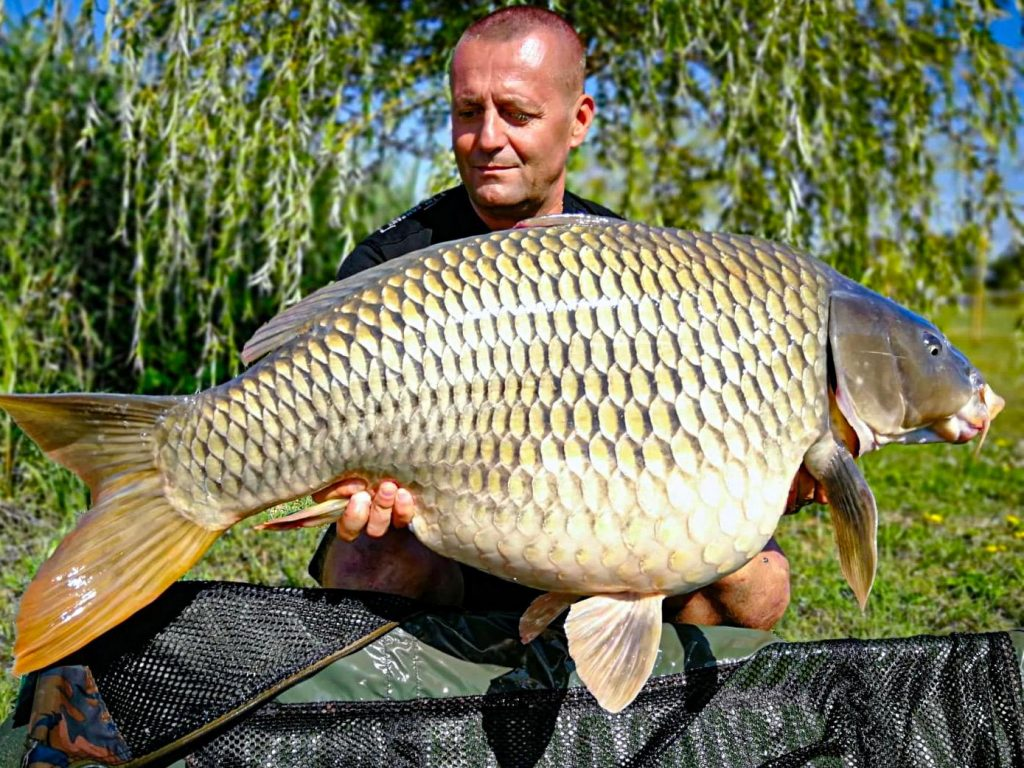 Big Carp Lake fish